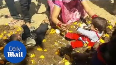 Crying children are thrown in COW POO during Hindu festival!