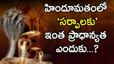 Why  Snakes are Considered Holy in Hinduism || Facts about snakes in eyeconfacts