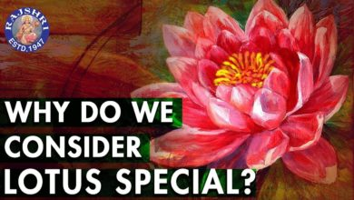 Do You Know? - Why Is Lotus Special? | Importance Of Lotus | Interesting Facts About Lotus