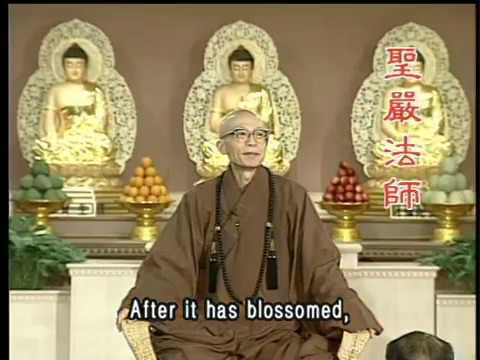 Why does Buddhism use the lotus flower as a symbol? (GDD-376) DVD
