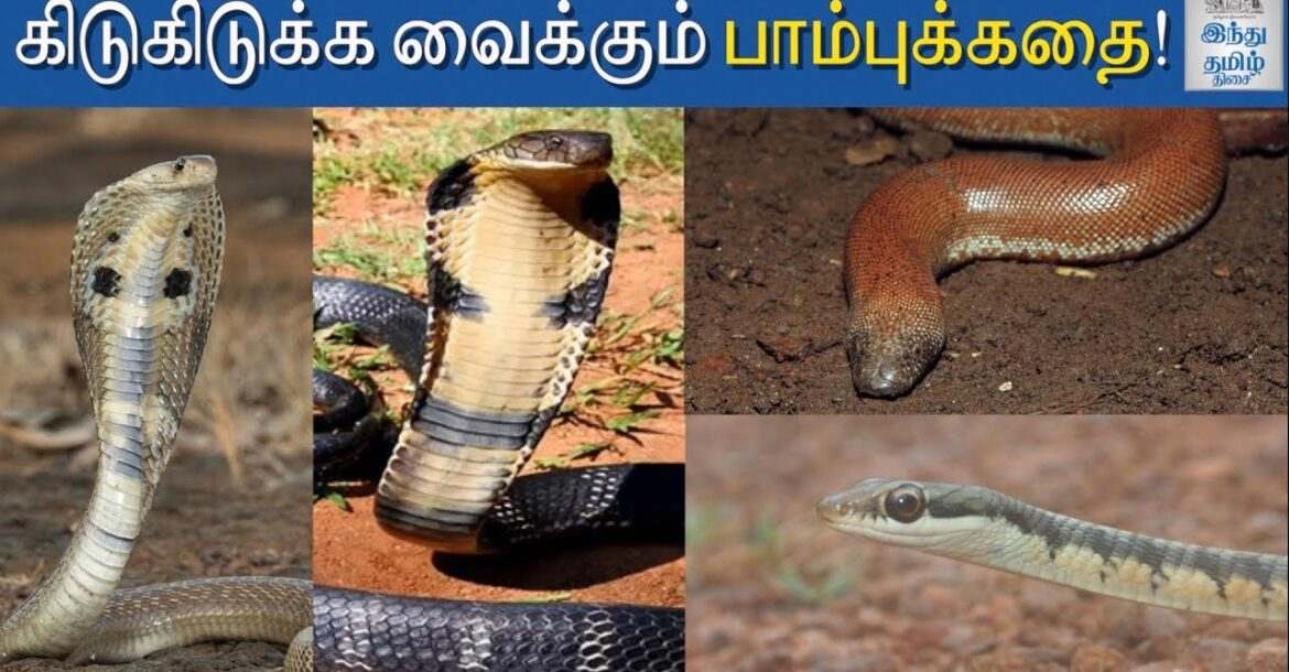 Science Behind Snakes | Indian Snakes | King Cobra | Russell's Viper | Hindu Tamil Thisai