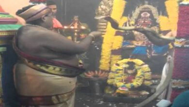 Real Snake Puja in Temple | Snake Worship