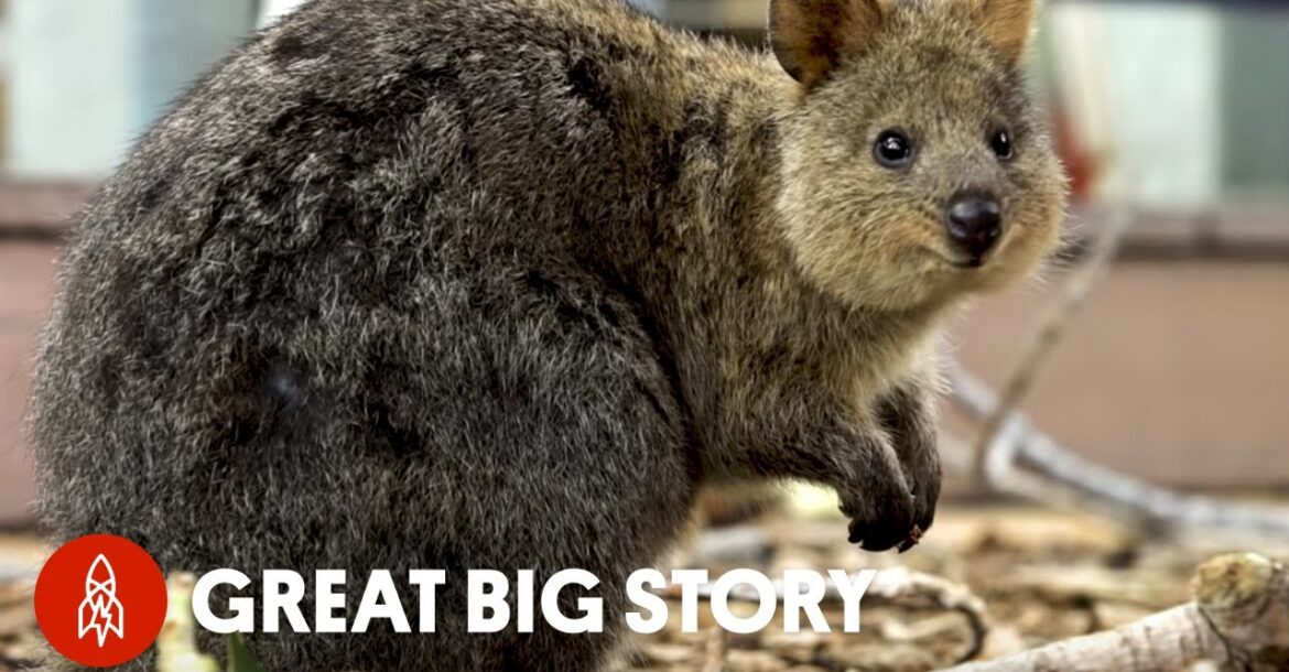 How Quokka Selfies Helped Protect This Adorable Animal