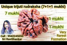 Unique trijuti rudraksha (BRAHMA, VISHNU, SHIVA)