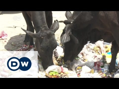 Violence in India as mobs defend cows | DW English