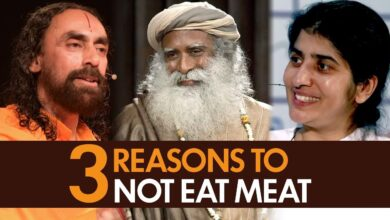 Bhagavad Gita Lessons Why You Should Not Eat Meat | 3 Reasons to Stop eating meat