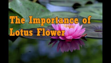 The Significance of the Lotus Flower in Hinduism - www.jothishi.com