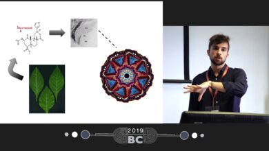 """Patrick Smith - Salvia divinorum and """"The Wheel"""": What Can We Learn From This Persistent Phenomenon?"""
