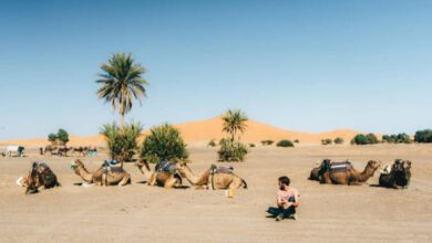 Day trips from casablanca morocco